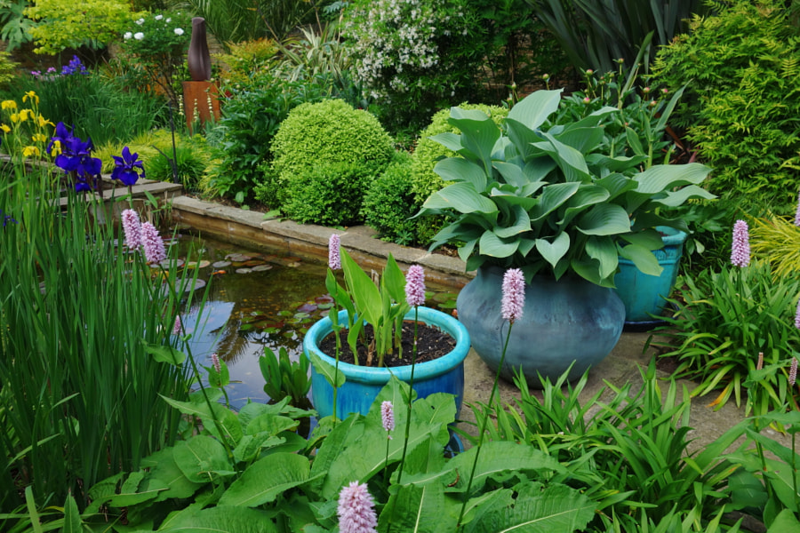 A  Patio Water Garden by Sandra on 500px.com