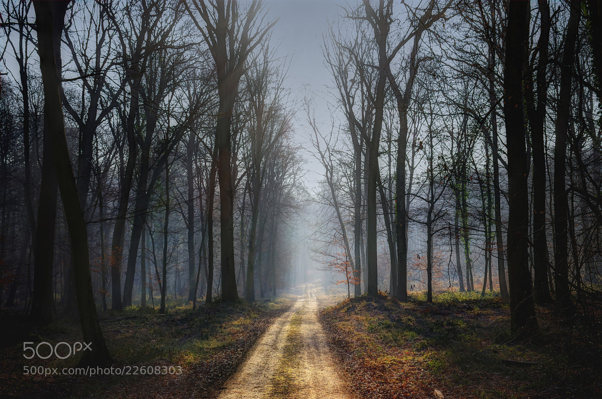 Photograph forest  by Thomas Vanderheyden on 500px