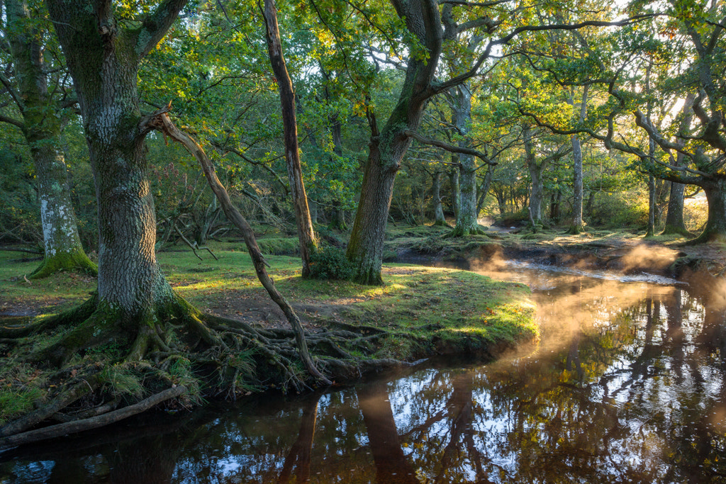 Photograph Ober Water, New Forest, Hampshire by Simon Byrne on 500px
