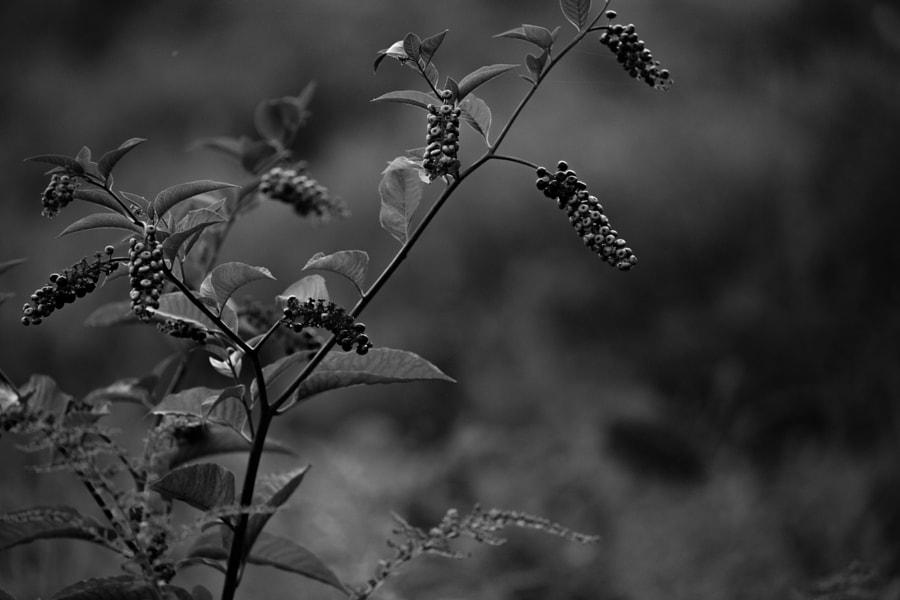 Wild Berries by Mark Becwar on 500px.com