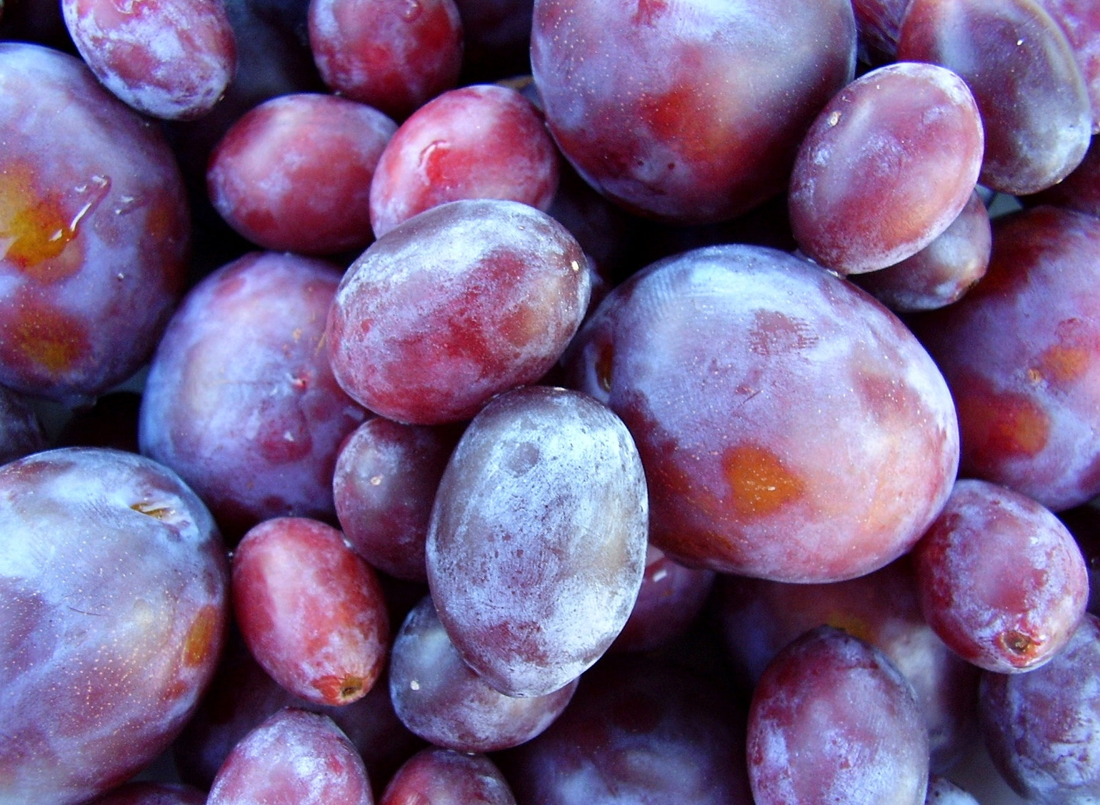Photograph the harvest of the plums by Andrea Macherelli Bianchini on 500px