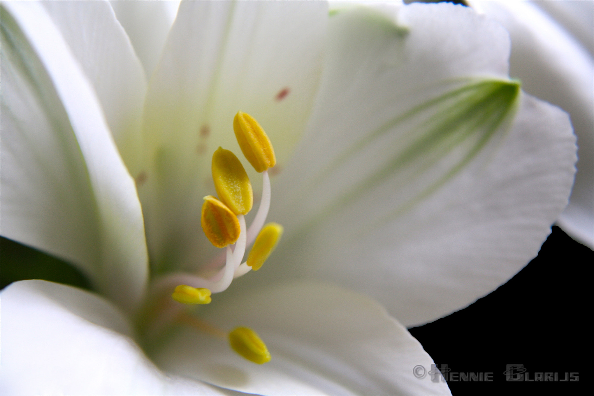 Photograph Open up by Hennie Clarijs on 500px