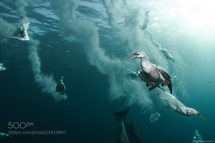 Photograph plunge divers by Alexander Safonov on 500px