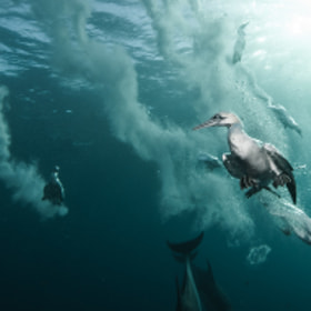 plunge divers by Alexander Safonov (pats0nn)) on 500px.com