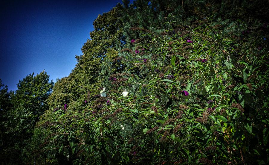butterfly von dirk derbaum auf 500px.com