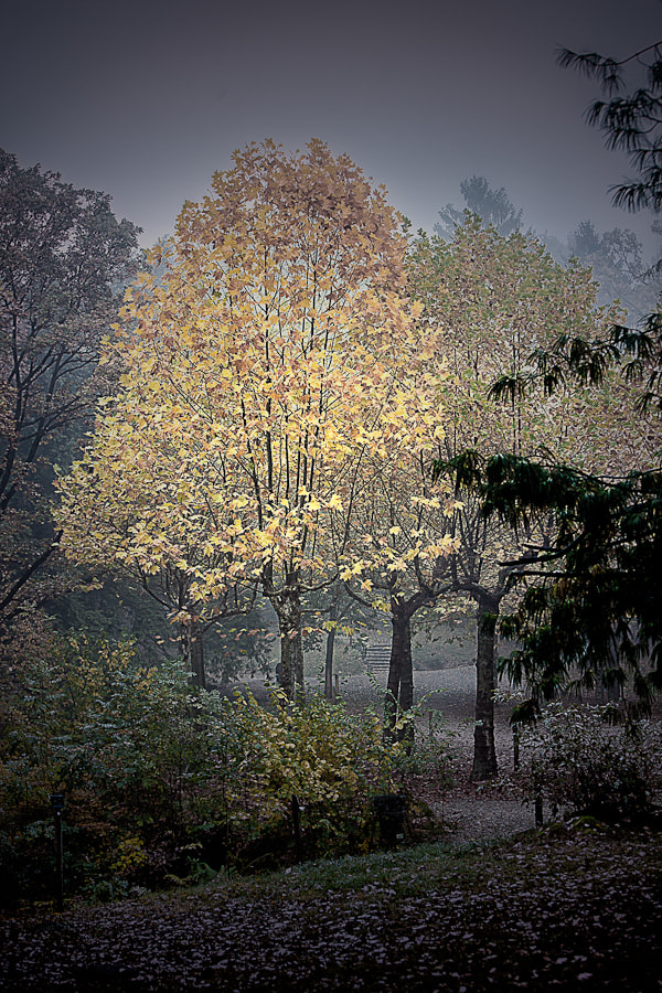 Photograph Autumn by Paolo Baronchelli on 500px
