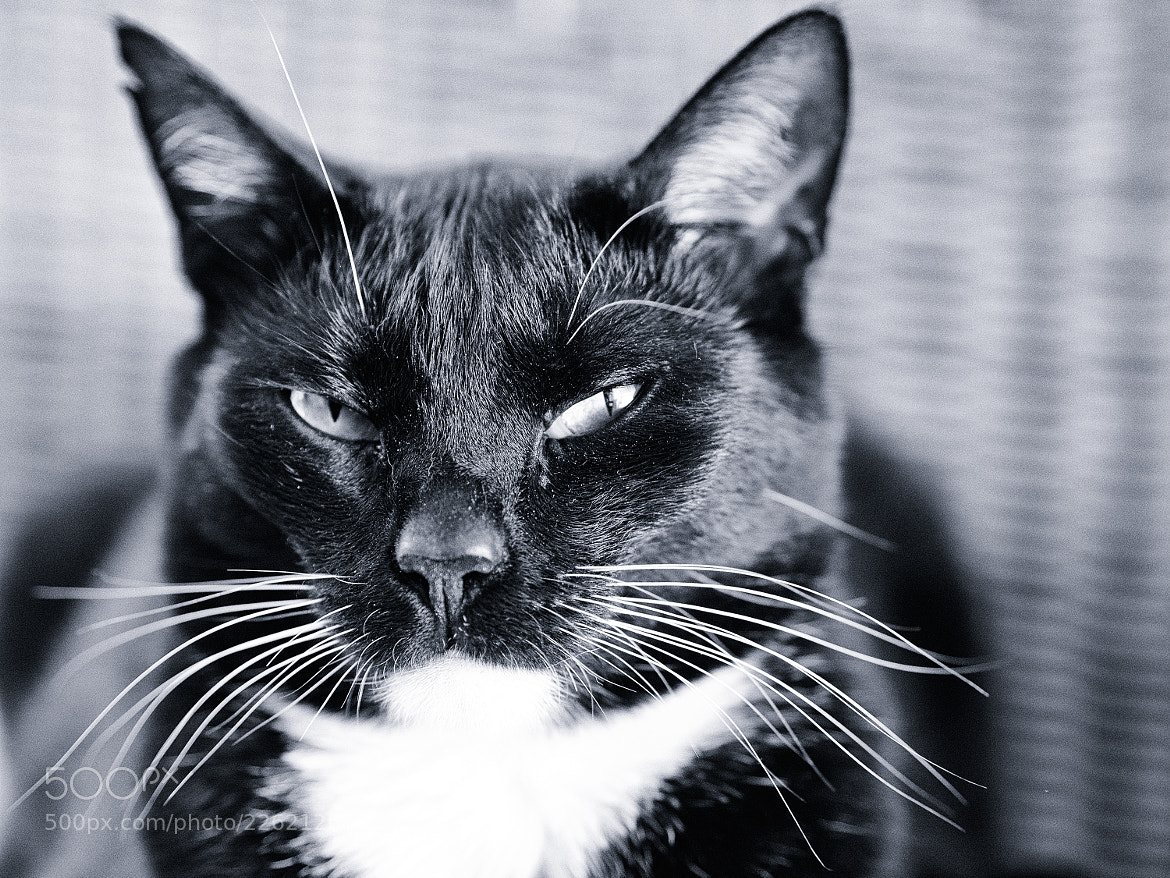 Photograph sceptical cat by Jan Kampling on 500px