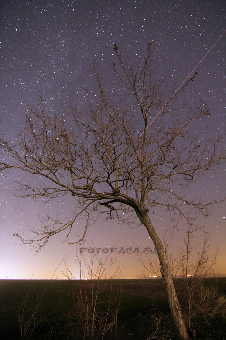 Photograph Under the shooting stars by Daniel Radev on 500px