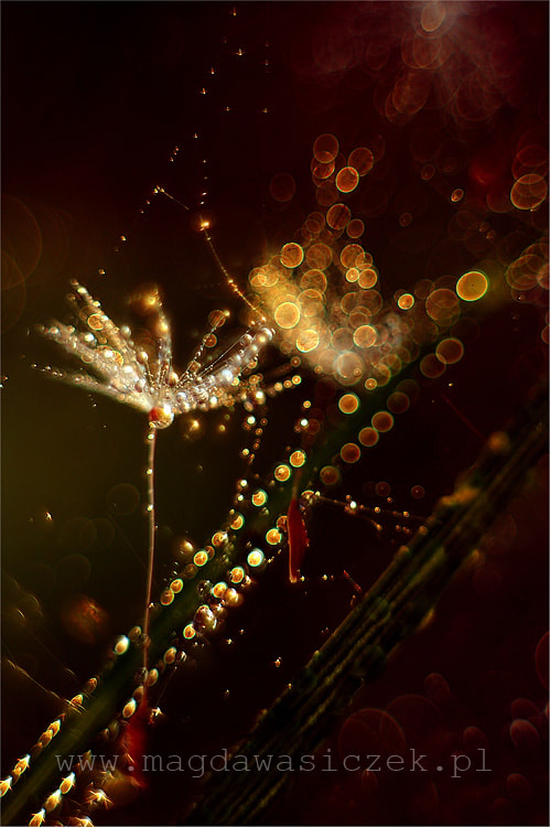 Photograph Sparkles by Magda Wasiczek on 500px
