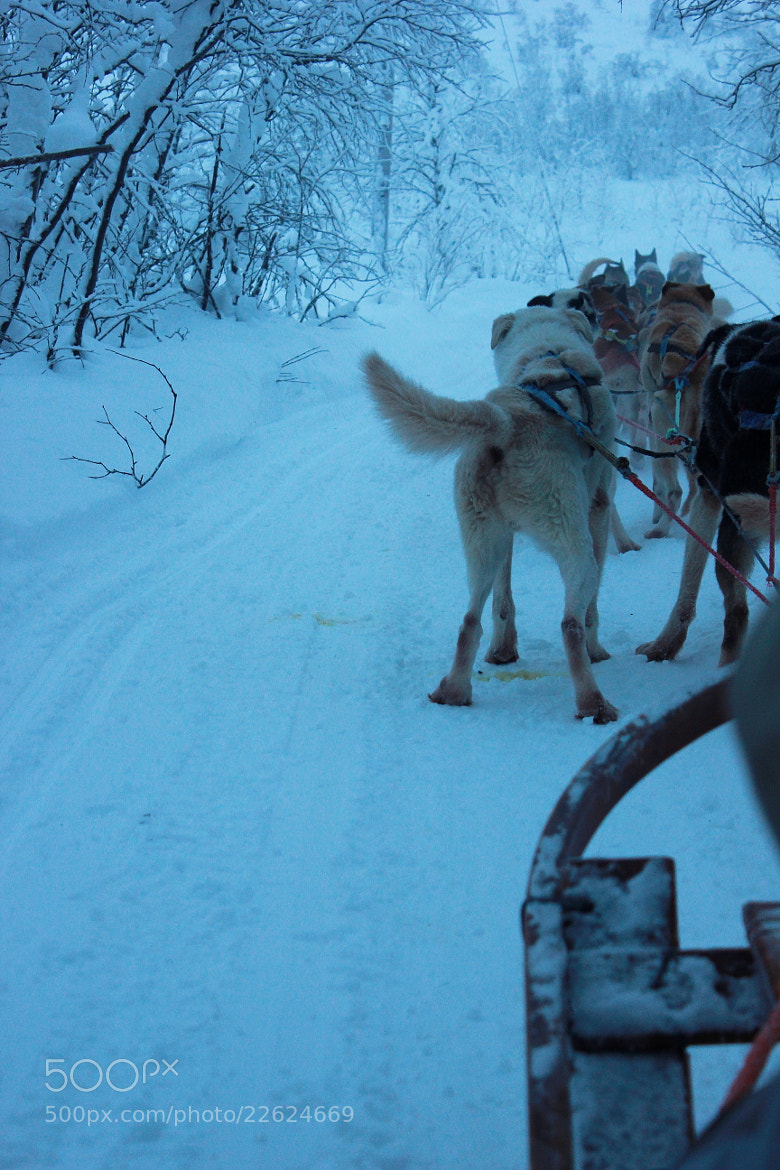 Photograph Dogsled by 巍 王 on 500px