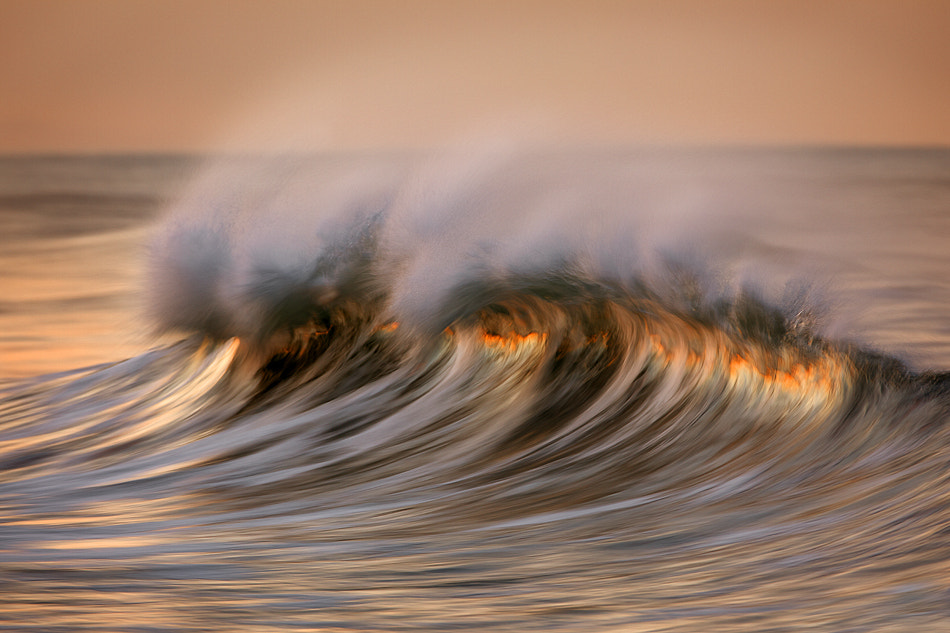 Photograph MG_8955 Rising Above The Surface by David Orias on 500px