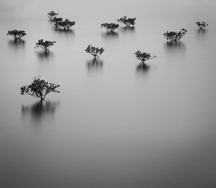 Mangroves by David Orr on 500px.com