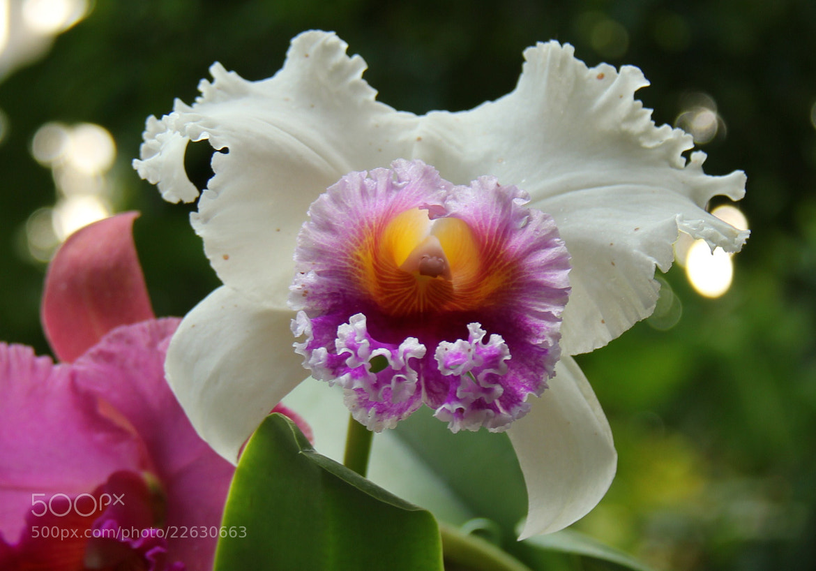 Photograph Flower #2 by S.m. Yang on 500px