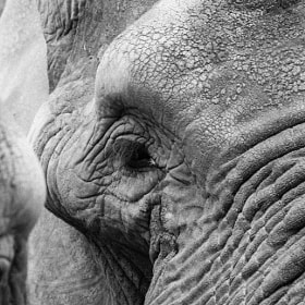 Wrinkles by Franco Canepa (FrancoCanepa)) on 500px.com
