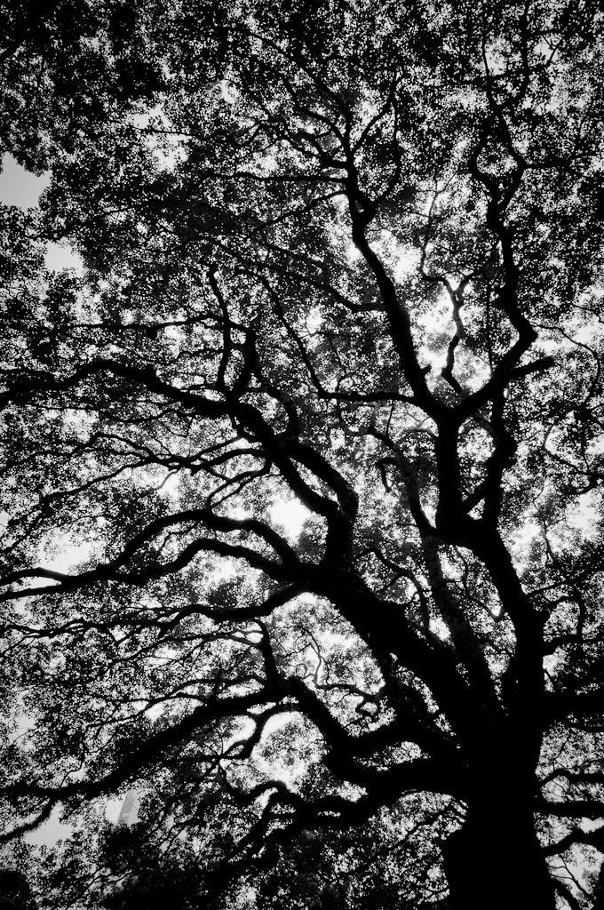 Photograph Branches by Natapong P. on 500px