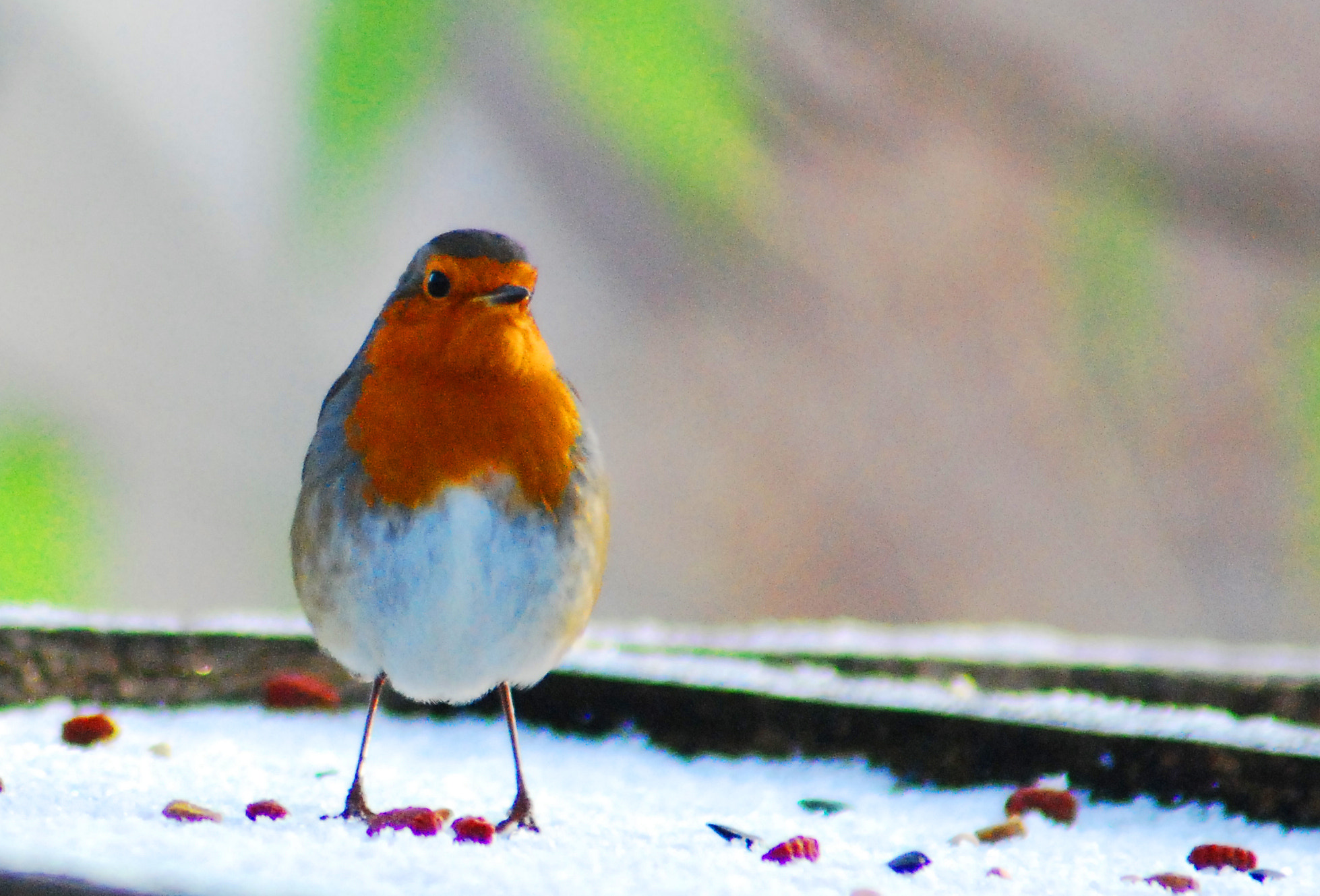 Photograph Robin by Chris Smith on 500px