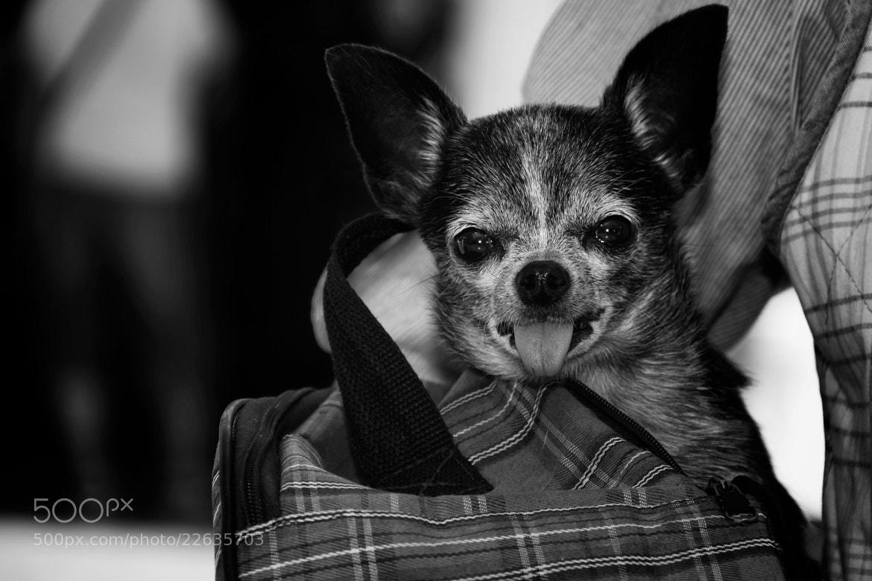 Photograph eared dog by Jenya Roslakov on 500px
