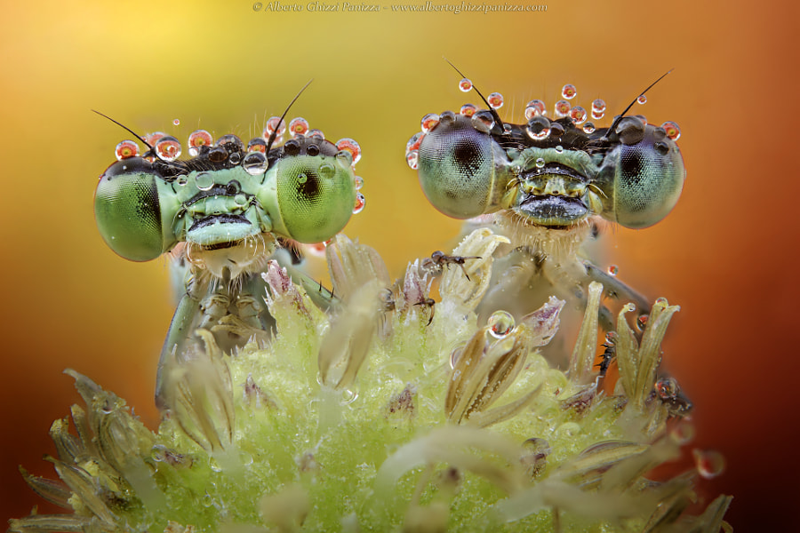 Two nice faces! by Alberto Ghizzi Panizza on 500px.com