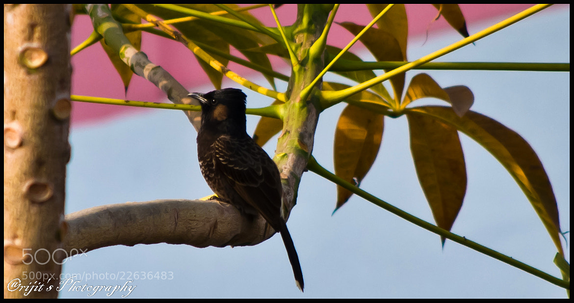 Photograph Lazy Evening by Arijit Bose on 500px