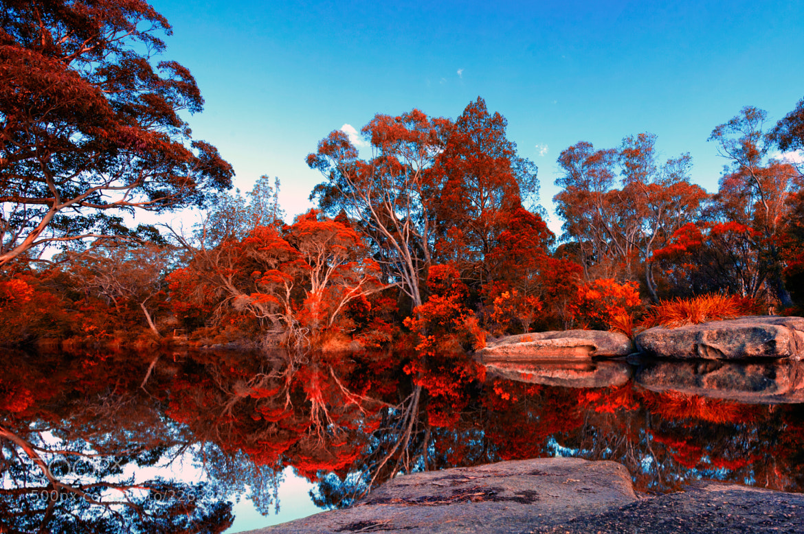 Photograph False Autumn by Shawn Truesdell on 500px