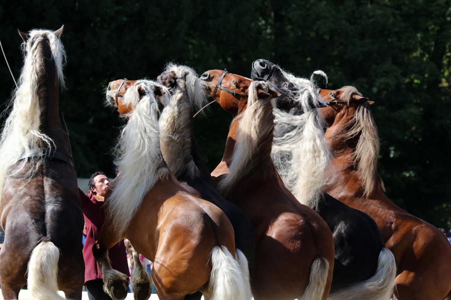 PferdeStark Wendlinghausen