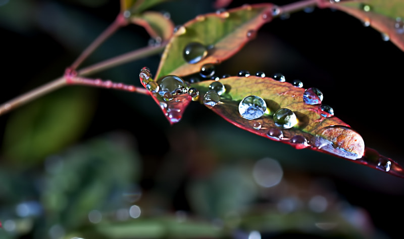 Photograph Droplet colours by Paolo Baronchelli on 500px