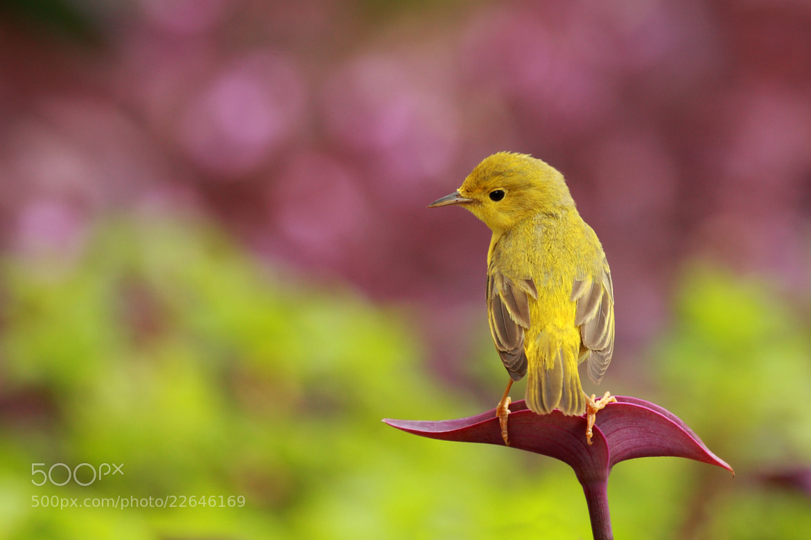 Photograph Purple and Yellow by Alex  Thomson on 500px