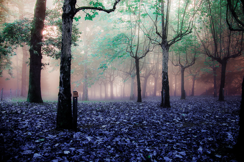 Photograph Woods of mistery by Paolo Baronchelli on 500px