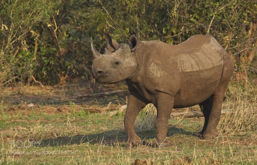 Taken in Matusadona NP, Zimbabwe, 16th September 2010