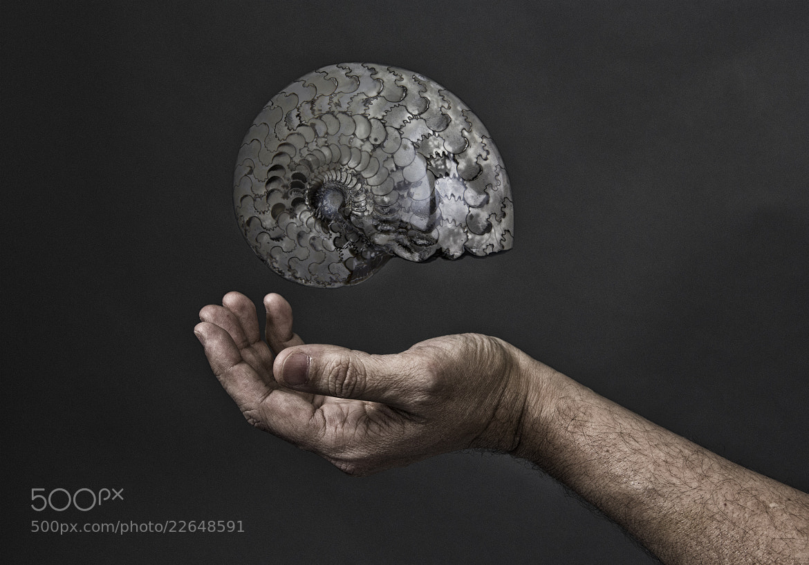 Photograph Evolution by Pedro Jarque Krebs on 500px