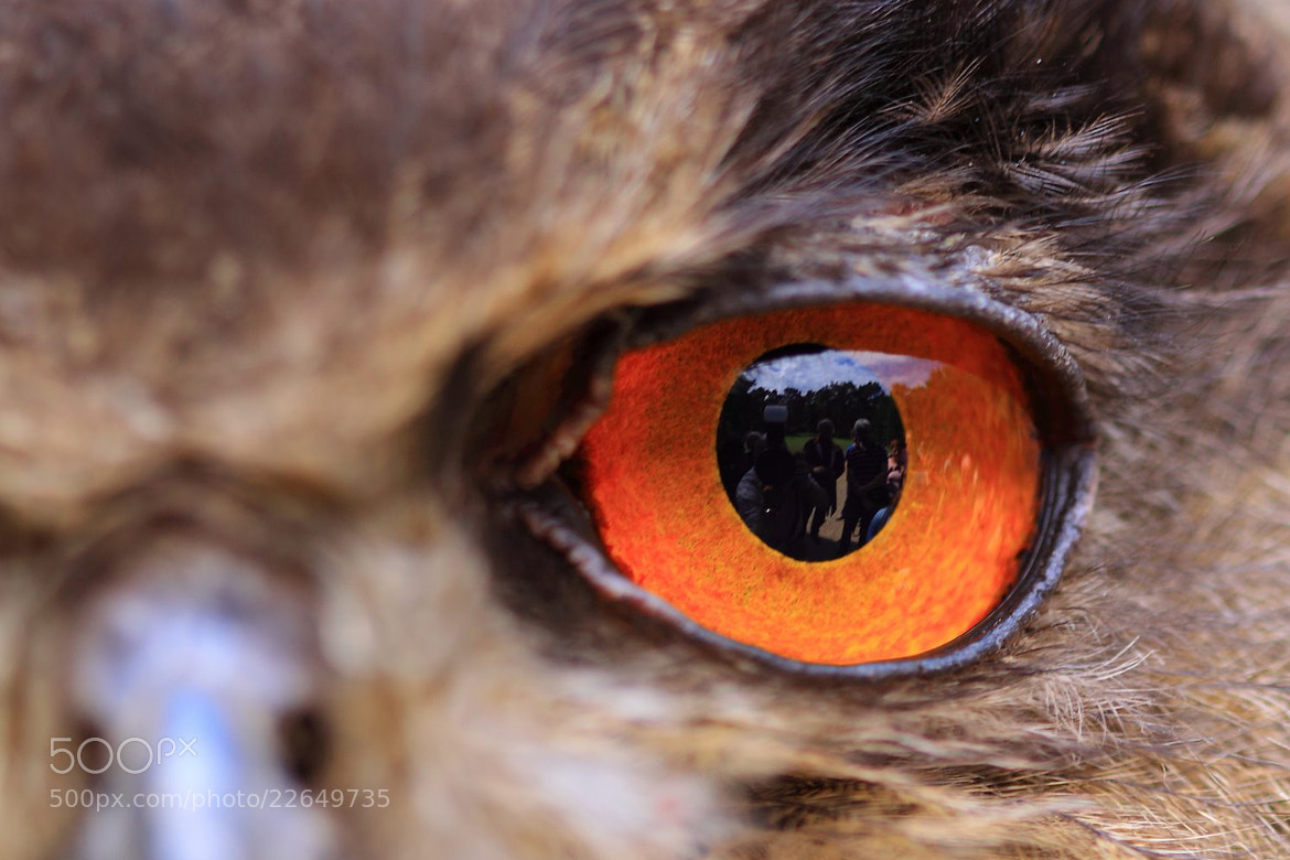 Photograph the eye of a Owl by Maruscik Photography on 500px