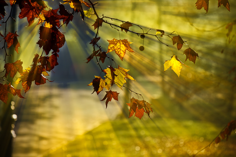 Photograph Rays of sunshine by Paolo Baronchelli on 500px