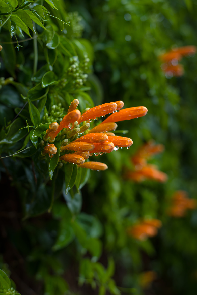 Photograph Flowers after rain by Lev Tsimbler on 500px