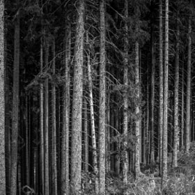 The Trees of Mysteries