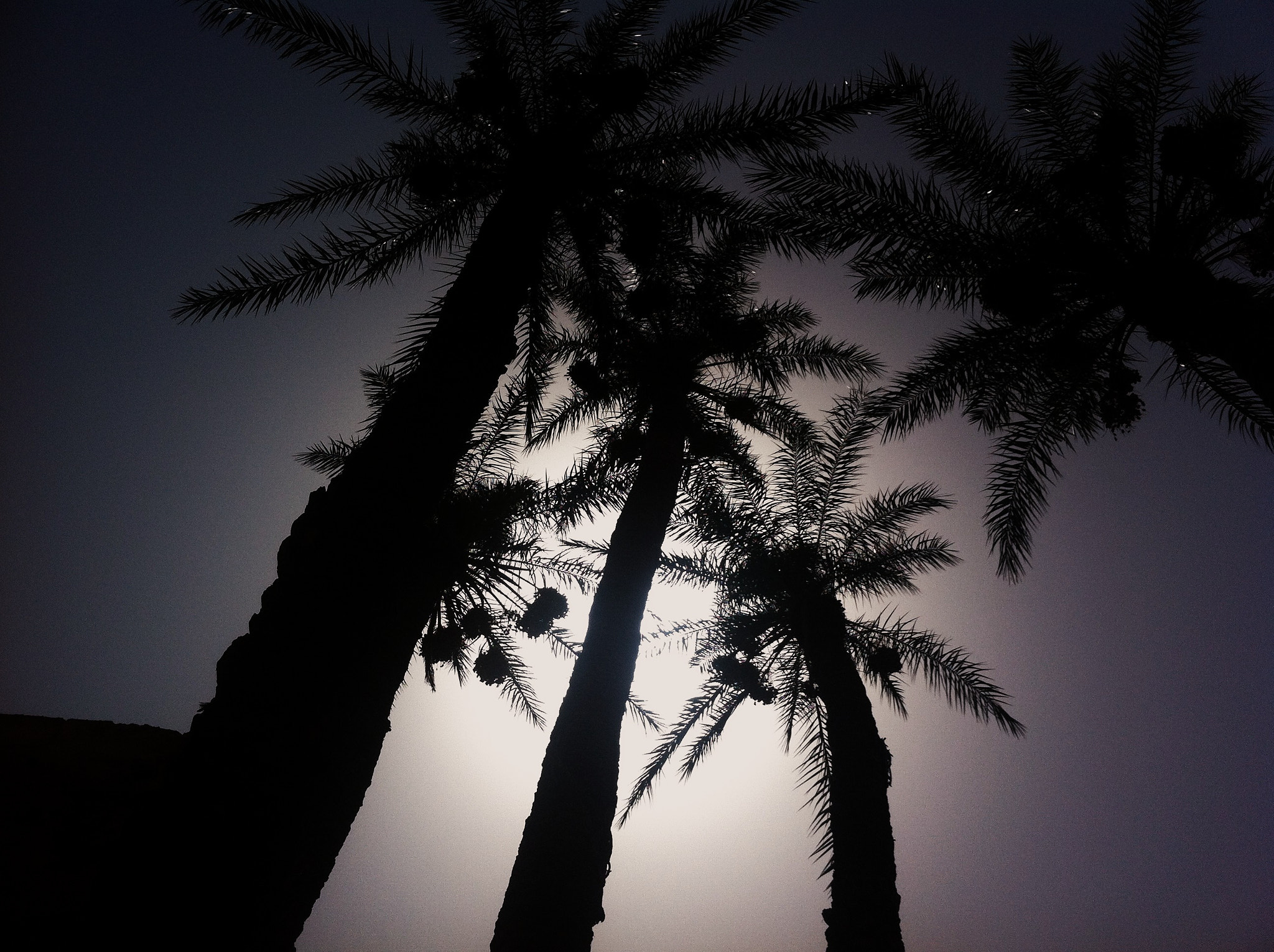 Photograph Palm Tree's by Kris Brown on 500px