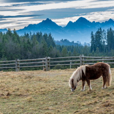 Horse Grazing - Bavarian Alps