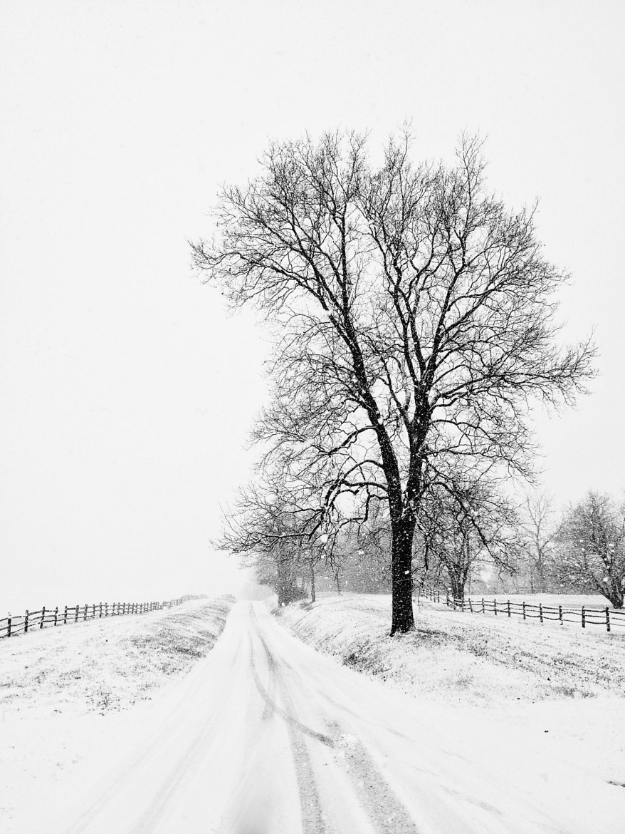 Photograph White-out by Alessandra Manzotti on 500px