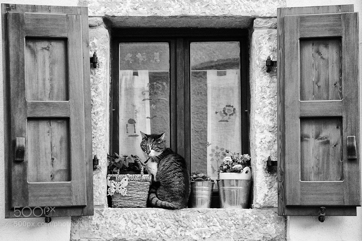 Photograph The cat and the window. by Lorenzo Cavalieri on 500px