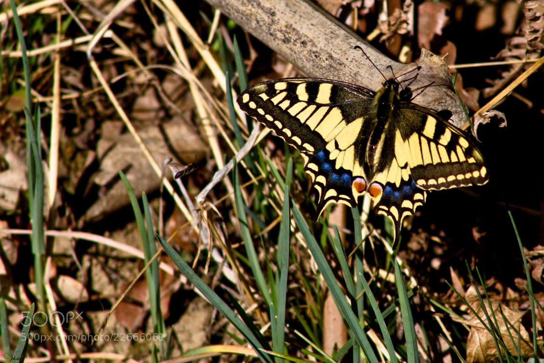 Photograph Butterfly by Jernej Kovac on 500px