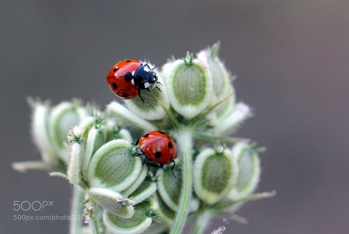 Photograph Playing ladybirds by Julia H on 500px