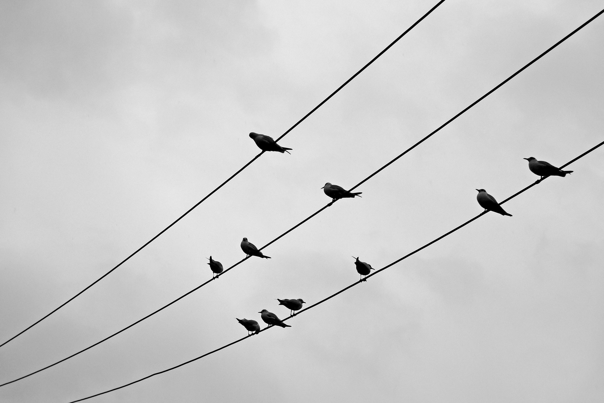 Photograph birds song by Ayhan Kaya on 500px