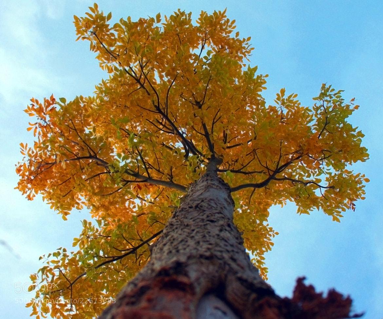 Photograph Treecolor II by Alexander Rodrigo on 500px