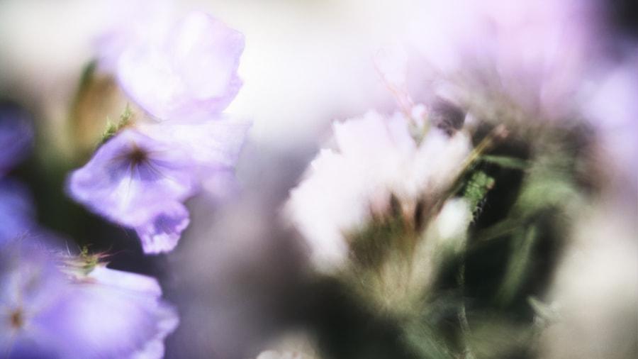 Purple Bouquet by Jeff Carter on 500px.com