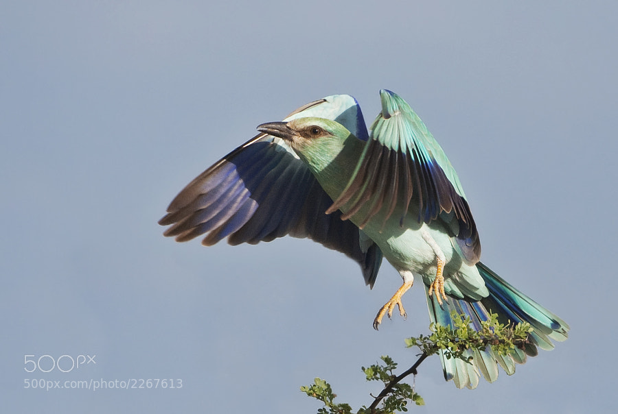 Taken in Central Kalahari Game Reserve, Botswana, 7th March 2009