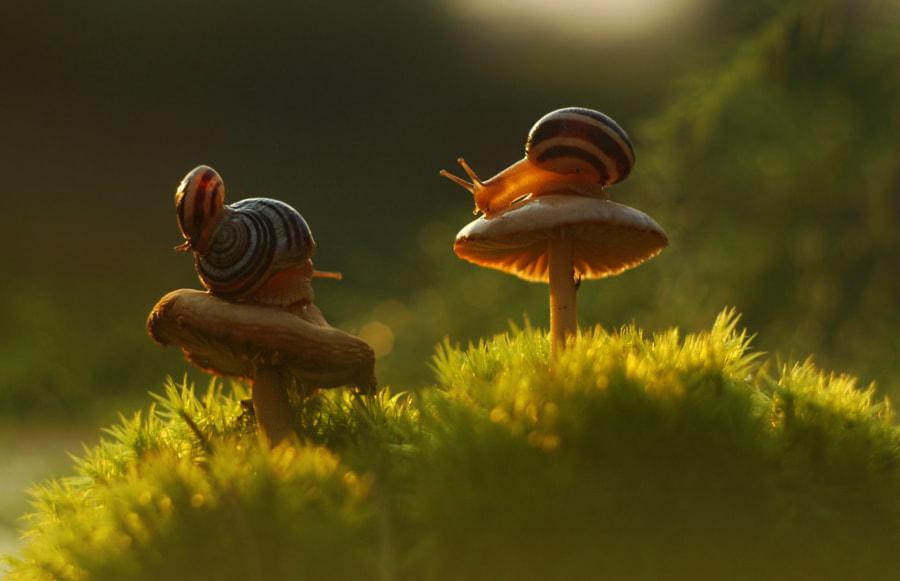 Forest Fairy Tale by Oleg Aleschenko on 500px.com
