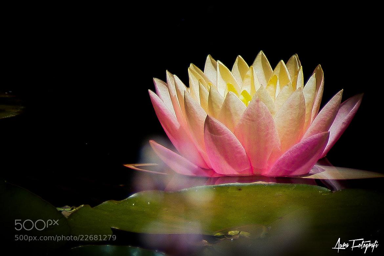 Photograph Bloom by Rajbir  on 500px