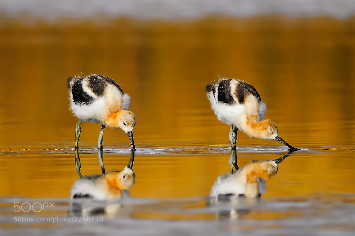 Photograph Synchronized Pair by Andy Nguyen on 500px