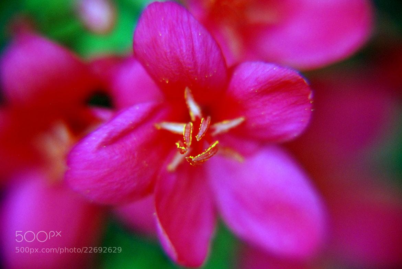 Photograph Fushia Pink by Mirai Borra on 500px