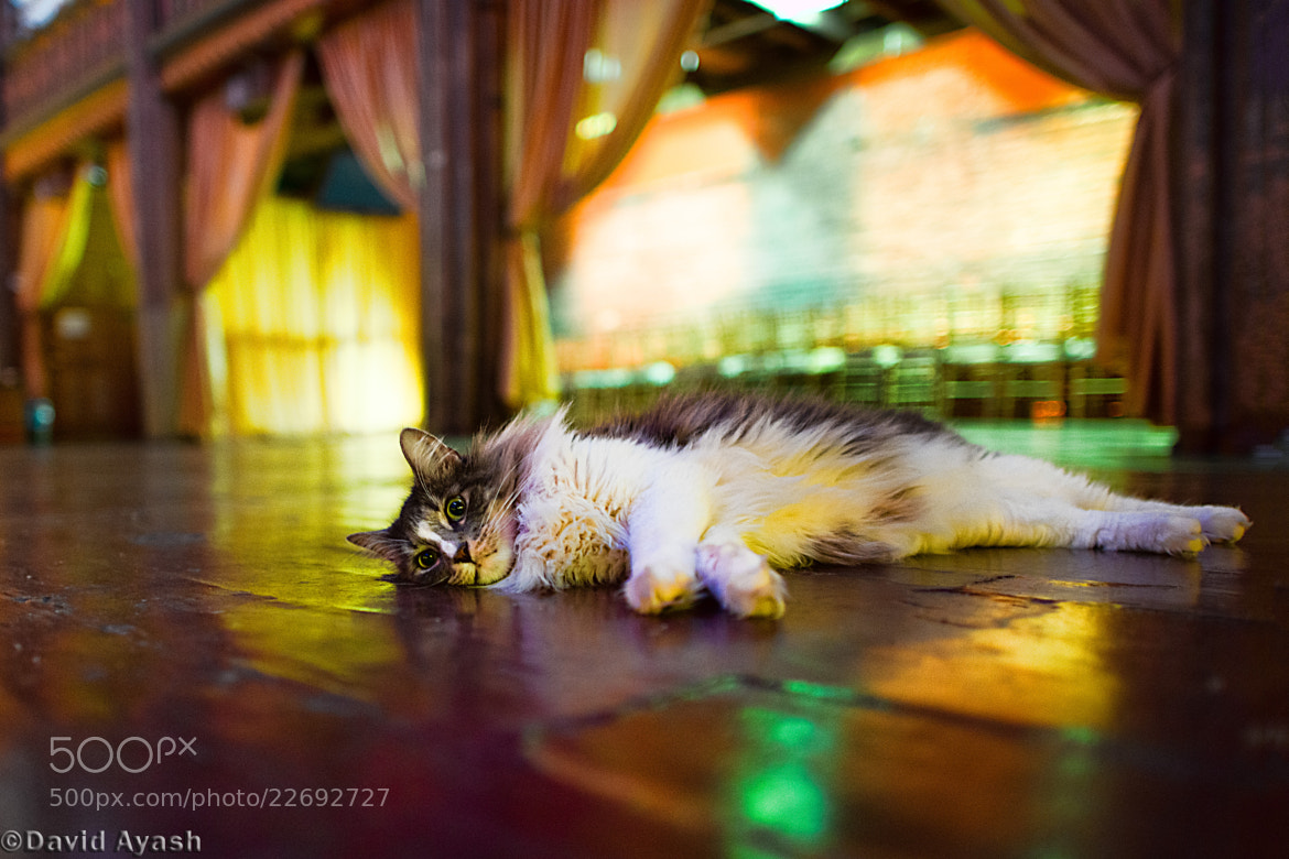 Photograph Cat in Synagogue  by David Ayash on 500px