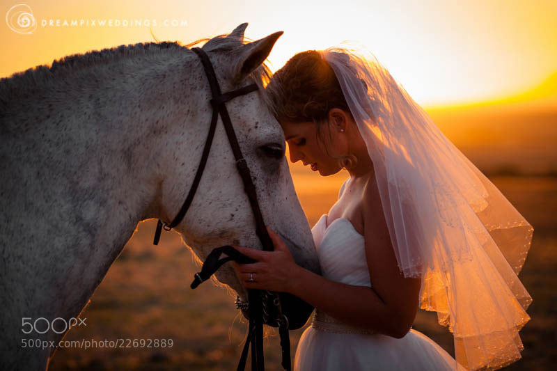 Photograph Bride and Horse by Kobus  Tollig on 500px